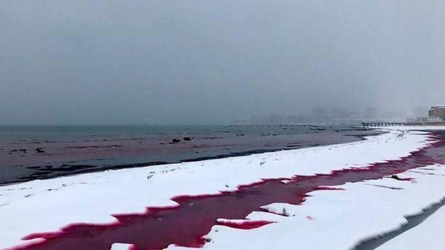 Kazakistan: le coste del Caspio si colorano di rosso sangue. Il video