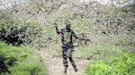 Locuste in Africa: a rischio 20 milioni di persone. L'allarme della FAO