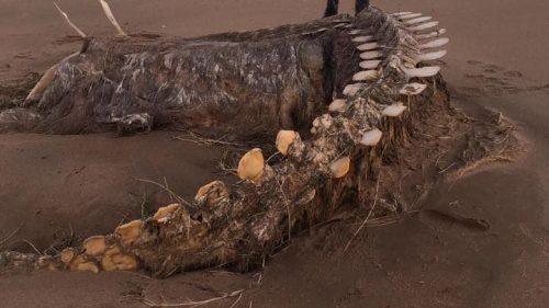 Scozia: uno scheletro misterioso sulla spiaggia di Aberdeen