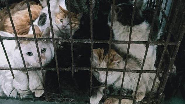 In Cina tornano i mercati di animali: ancora in vendita cani, gatti, serpenti e pipistrelli