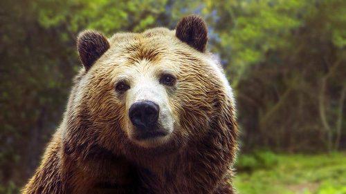 Gli orsi di tutto il mondo si stanno svegliano dal letargo