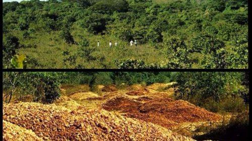 Costa Rica: le bucce di arancia fanno rinascere la foresta