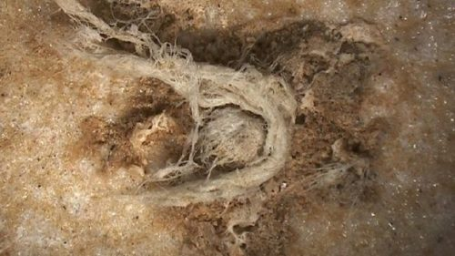 Scoperta la corda più antica del mondo: ha 52 mila anni