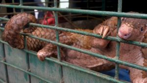 Zoonosi: il 75% delle epidemie provocate da allevamenti intensivi e mercati