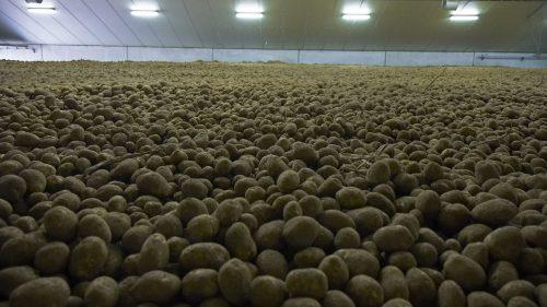 Coronavirus: in Belgio il Governo 'consiglia' il consumo di patate locali
