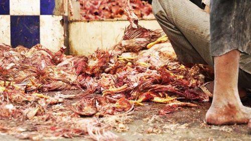 Chiudere i wet markets: la petizione internazionale di Animal Equality all'ONU