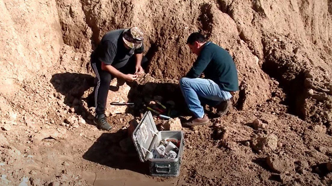 Palentologia: scoperti i resti fossili di un bradipo gigante vissuto 700.000 anni fa