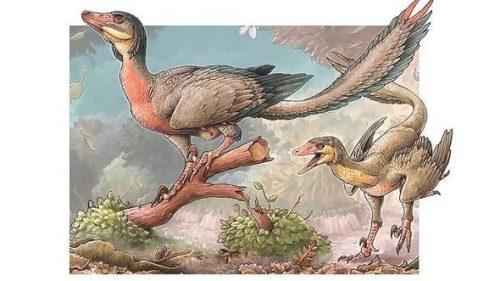 Un dinosauro con le ali scoperto in Argentina