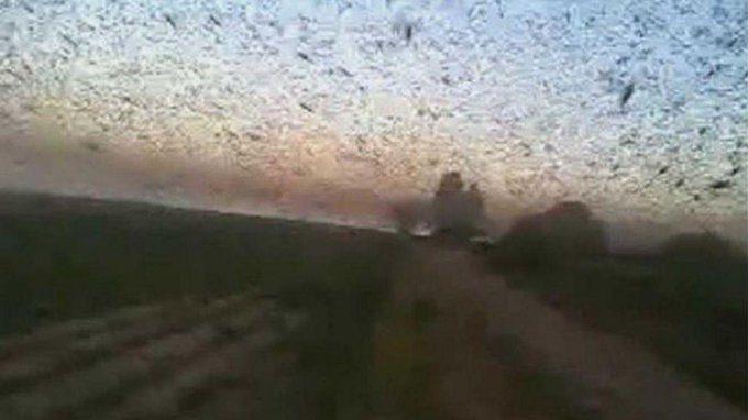 La piaga delle locuste colpisce l'Argentina. Il video