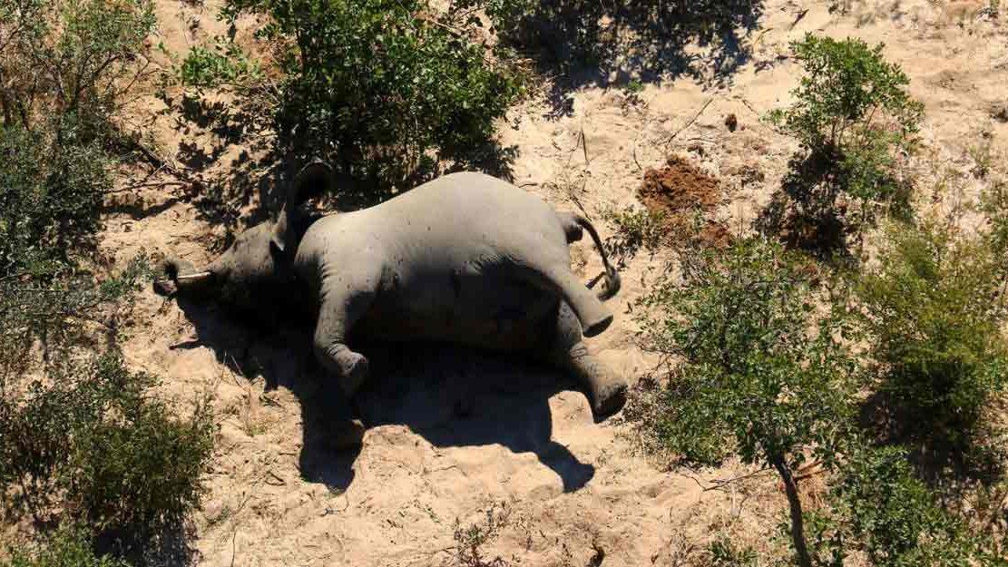 Botswana: si infittisce il mistero della strage di elefanti