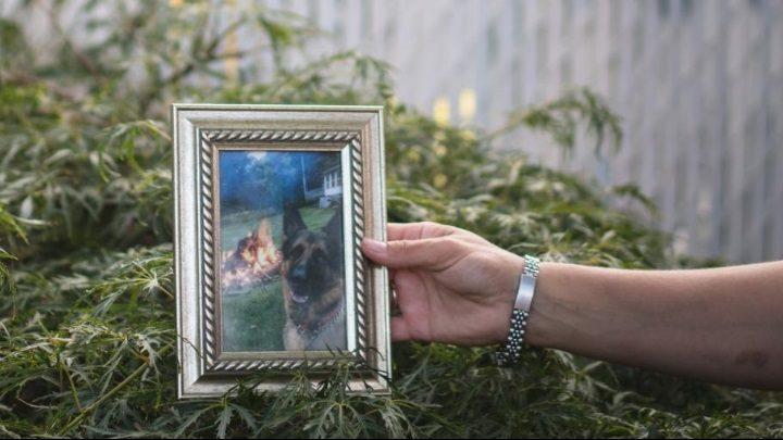 USA: muore il primo cane positivo al coronavirus