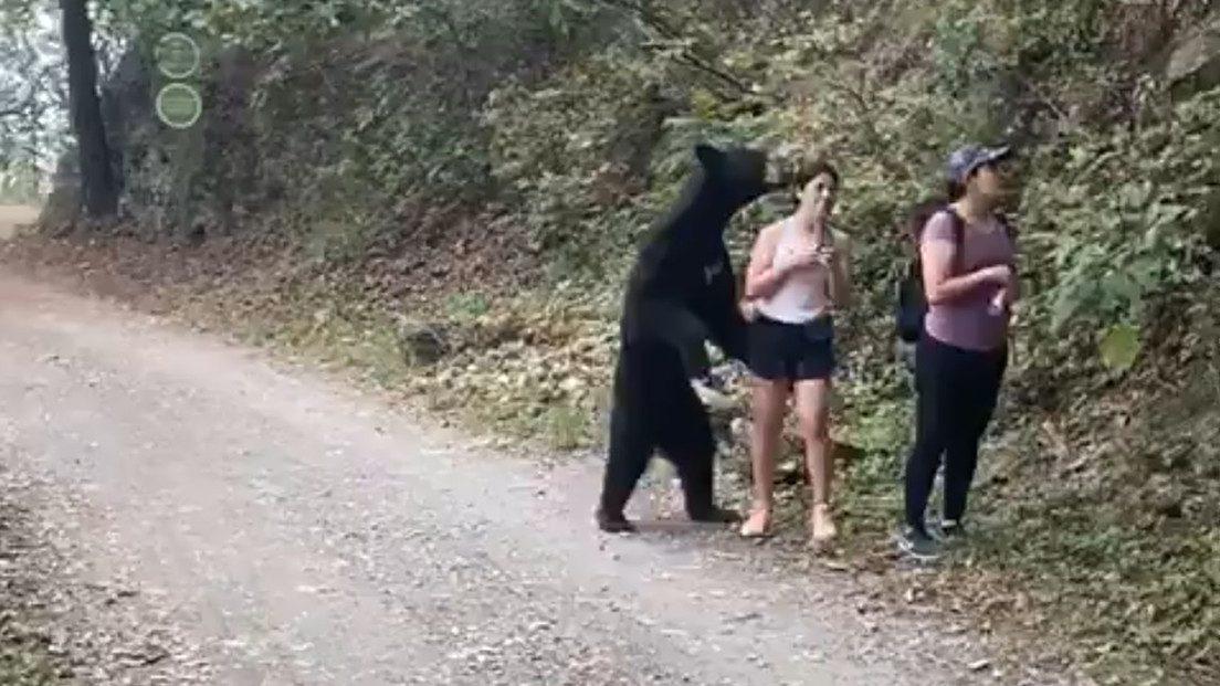 Messico: orso nero si avvicina. Paura per 3 turiste. Il video