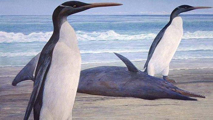 Paleontologia: i resti di giganteschi pinguini scoperti in Nuova Zelanda