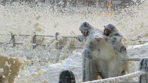 Sudafrica: la schiuma invade Città del Capo. Il video