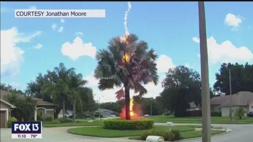 Florida: raro 'fulmine a ciel sereno' colpisce ed incendia una palma. Il video