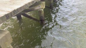 Batteri mangiacarne nelle acque del Long Island Sound. L'allarme delle autorità