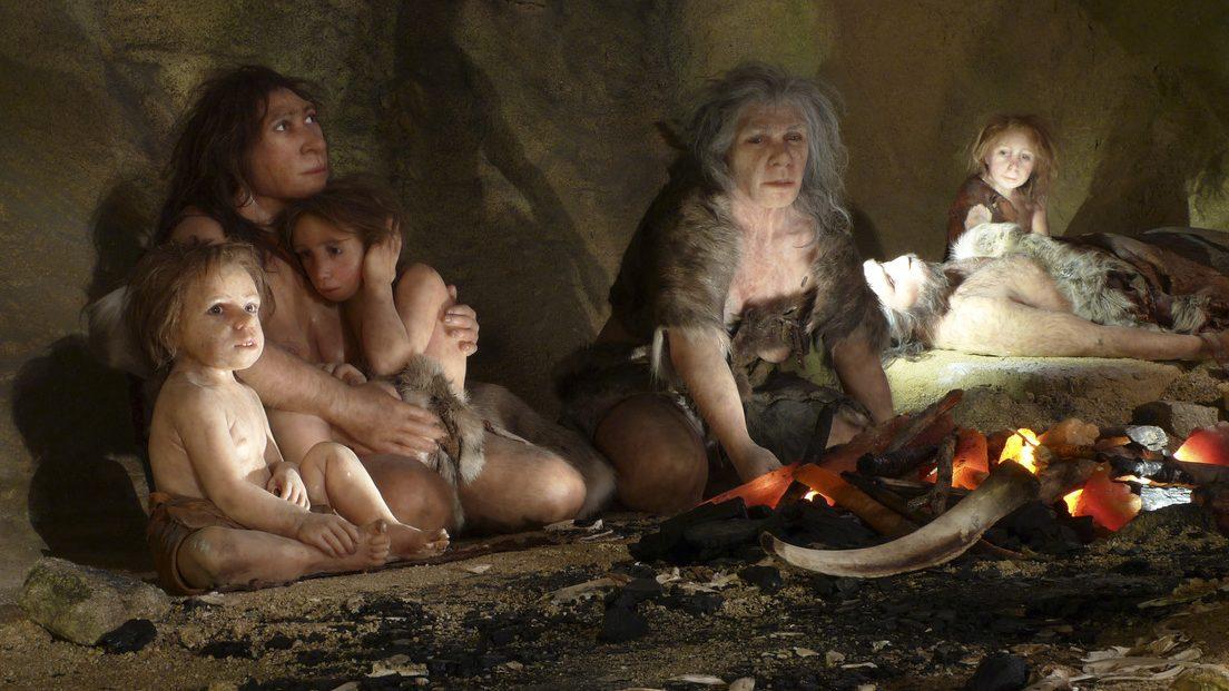 Scoperta la dieta dei Neanderthal: ecco cosa mangiavano gli antichi ominidi