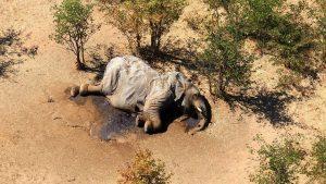 Botswana: scoperta la causa della strage di elefanti