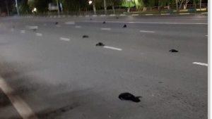 Russia: decine di uccelli morti in strada a Balakovo. Indagano le autorità sanitarie