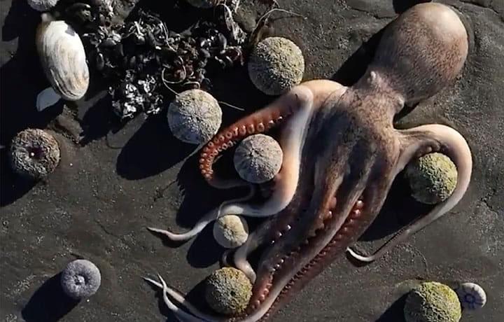 Kamchatka: nuova misteriosa moria di pesci sulla costa. Surfisti perdono la vista