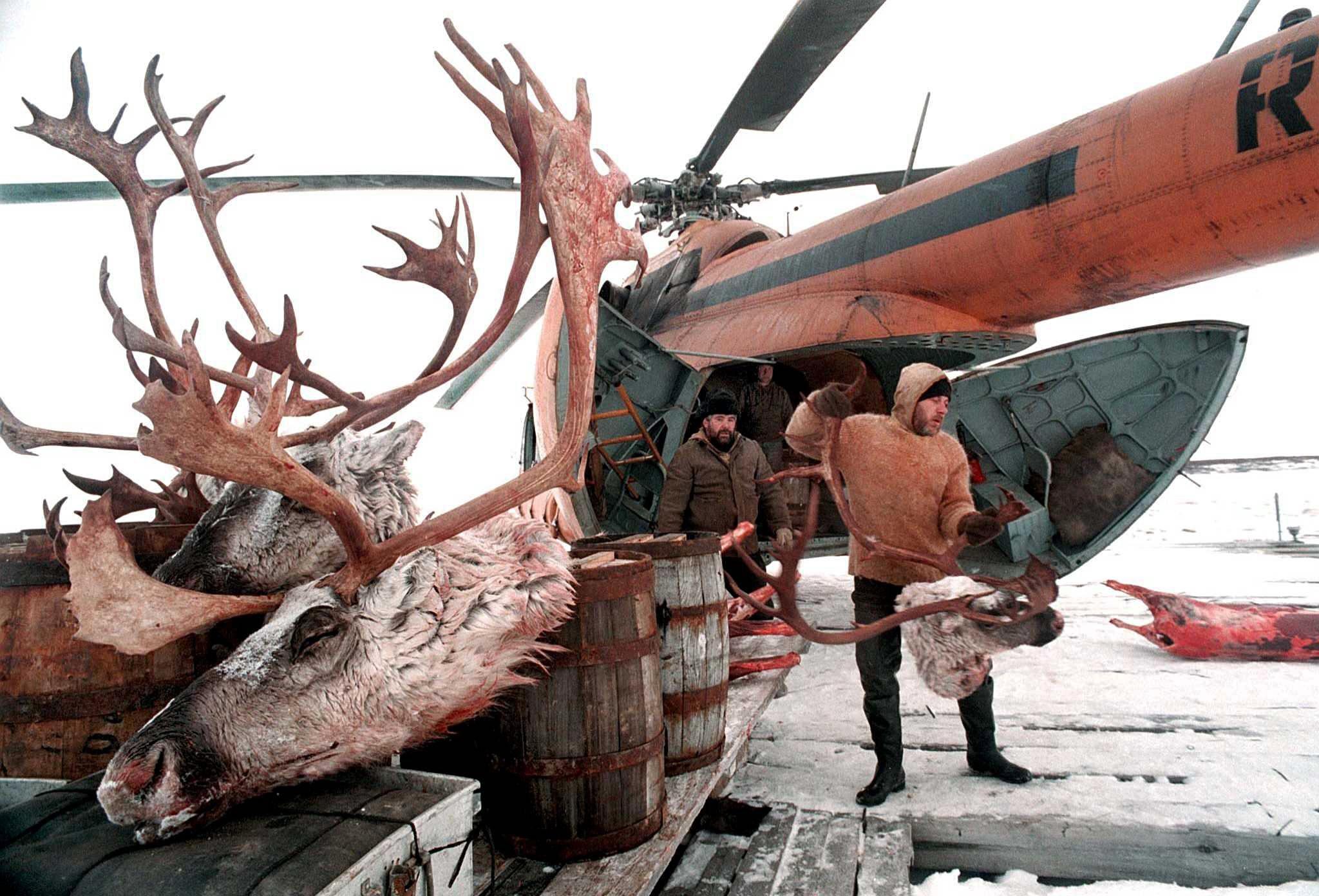Siberia: lo scongelamento dei ghiacci moltiplicherà le epidemie di antrace
