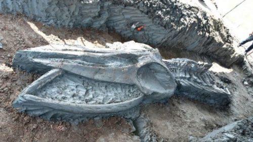 """Scoperto un enorme scheletro di balena lungo 12 metri: """"Dovrebbe avere 5000 anni"""""""