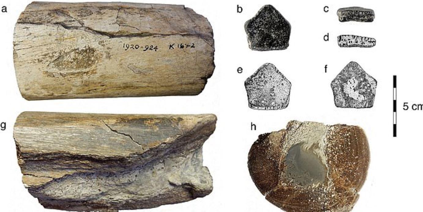 Identificati i primi fossili di dinosauro in Irlanda: hanno 200 milioni di anni