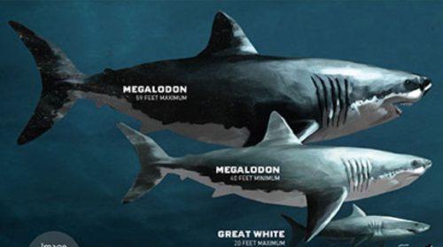 Scoperte le tre cause dell'estinzione del megalodonte: come è scomparso il gigante dei mari