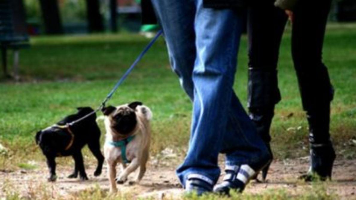 Coronavirus: passeggiata con il cane potrebbe aumentare rischio di contagio del 78%