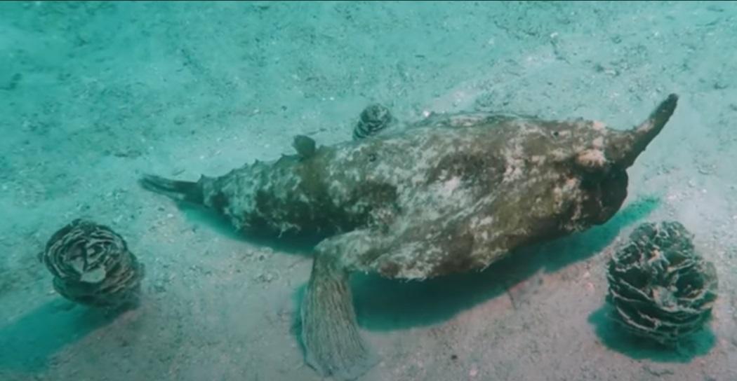 Un 'pesce che cammina' filmato nel Mare dei Caraibi