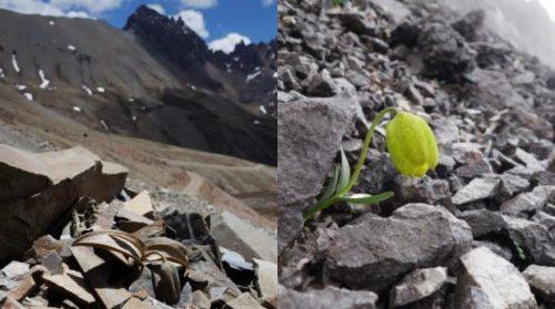 Una pianta cinese ha cambiato colore per paura dell'uomo