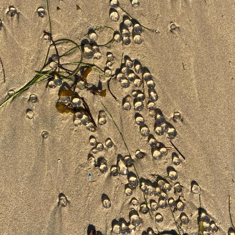 California: un'invasione di 'palline trasparenti' ricopre le spiagge di Orange County