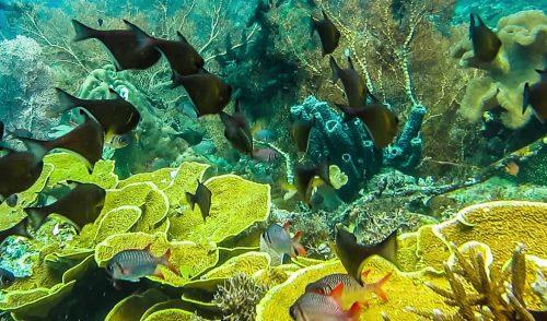 Scoperto un maestoso santuario dei coralli nell'oceano Indiano: è il regno della biodiversità