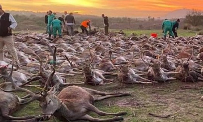 Cacciatori spagnoli entrano in fattoria e uccidono 540 cervi. Orrore in Portogallo