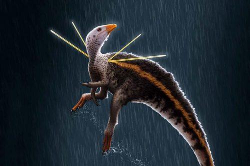 Ubirajara jubatus: uno dei  dinosauri più stravaganti mai scoperti