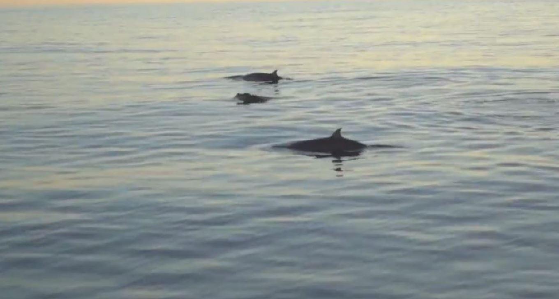 Avvistata una nuova specie di balena: emette un suono mai sentito prima