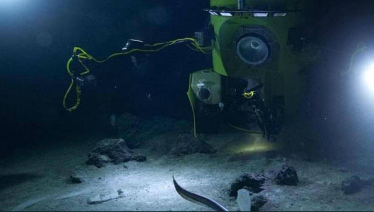 Scoperte tracce di mercurio nella Fossa delle Marianne: portato dalle carcasse dei pesci
