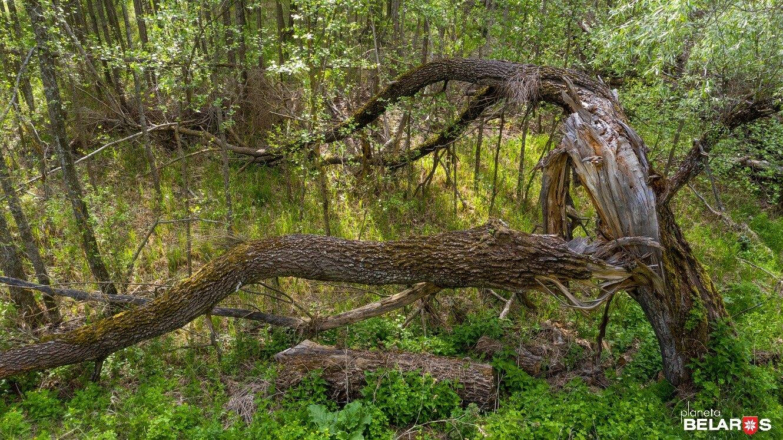 Chernobyl: rilevati alti livelli di radioattività nelle colture e negli alberi