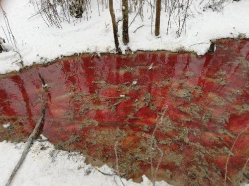 Russia: sversa scarti di lavorazione in foresta: allevamento di trote provoca disastro ambientale