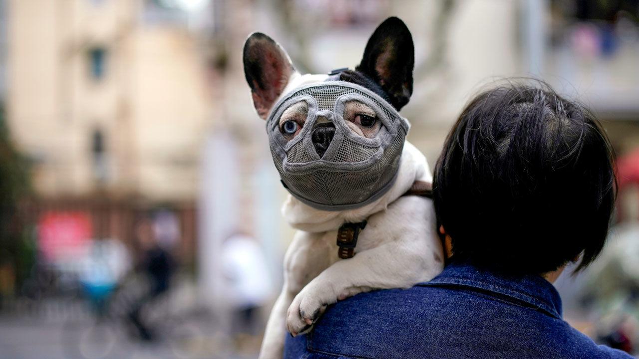 Canada: boom di casi di 'coronavirus canino' a Calgary