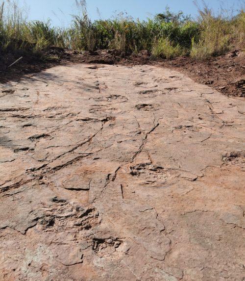 Cina: emergono oltre 240 impronte di dinosauri. É il sito più grande mai scoperto nel paese