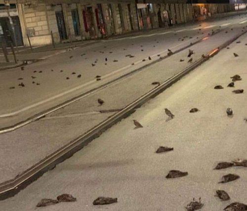 Roma: i botti di capodanno provocano strage di uccellini