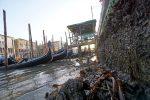Bassa marea record a Venezia: canali quasi a secco e disagi alla navigazione