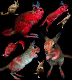 L'incredibile bioluminescenza di un piccolo mammifero africano
