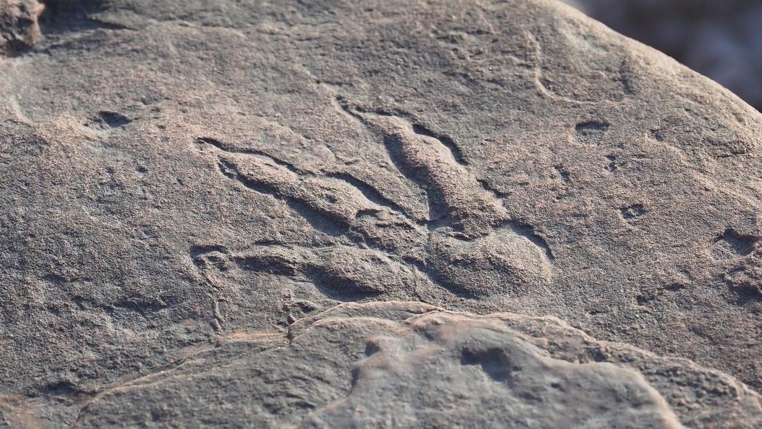 Inghilterra: una bambina di 4 anni scopre impronta di dinosauro