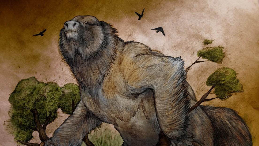 Argentina: scoperti i resti di un bradipo gigante risalente a oltre 3,5 milioni di anni fa