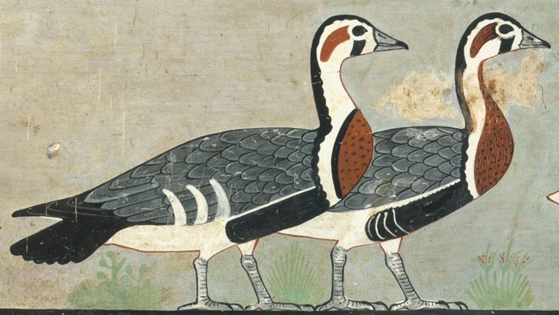 Una specie sconosciuta di oche scoperta in una pittura egizia di 4.600 anni fa