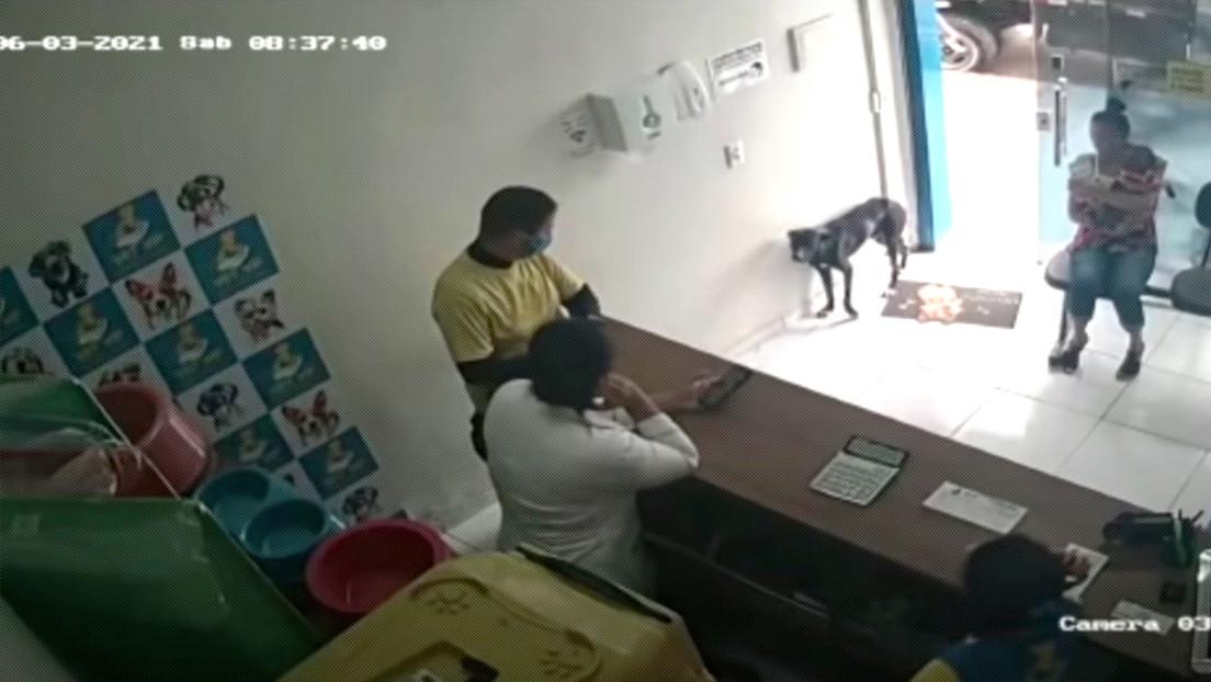 Cane randagio entra in clinica chiedendo aiuto per la zampa ferita
