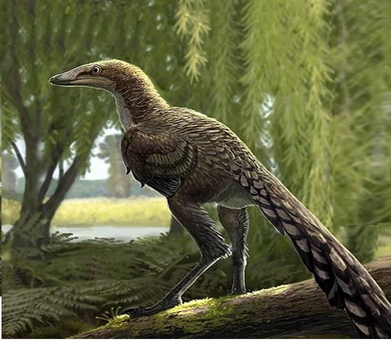Paleontologia: scoperto nuovo dinosauro carnivoro vissuto 66 milioni di anni fa in Europa