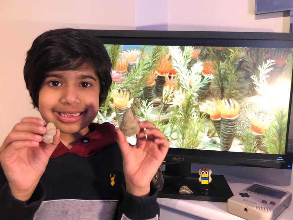 Inghilterra: bambino scopre fossile di 488 milioni di anni fa nel suo giardino